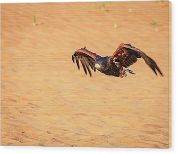 Wood Print featuring the photograph Harris Hawk by Alexey Stiop