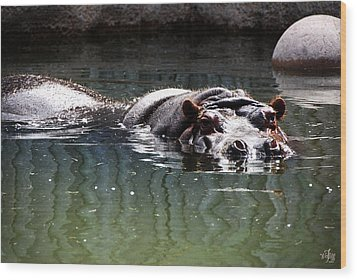 Hippo Wood Print by Thea Wolff