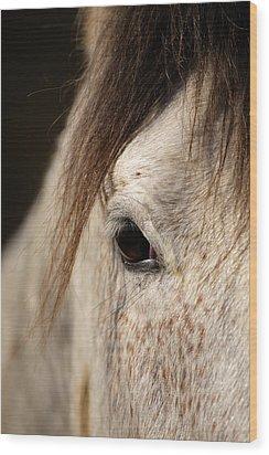 Horse Portrait Wood Print by Ian Middleton