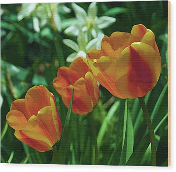 3 Lips Tulips Wood Print by Sheryl Thomas