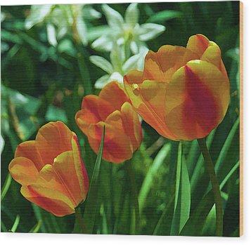 3 Lips Tulips Wood Print by Sheryl Thomas