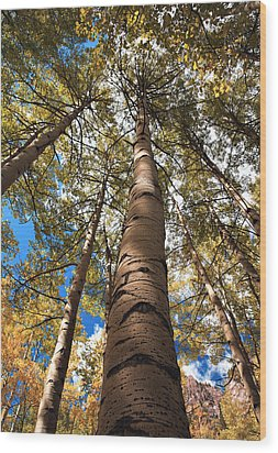 Looking Up Wood Print by Marilyn Hunt