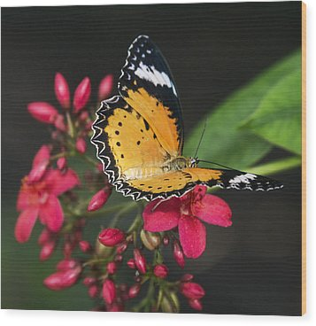 Malay Lacewing Butterfly  Wood Print by Saija Lehtonen