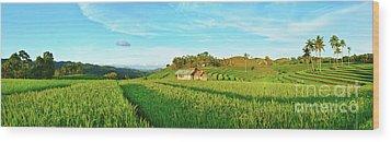 Paddy Rice Panorama Wood Print by MotHaiBaPhoto Prints