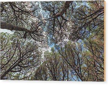 Pinewood Forest, Cecina, Tuscany, Italy Wood Print by Elenarts - Elena Duvernay photo