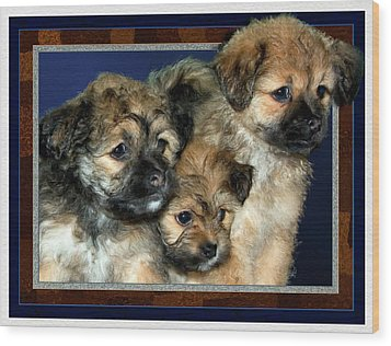 3 Pups Wood Print by Harry Hunsberger