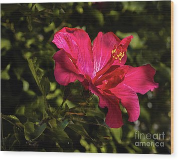 Wood Print featuring the photograph Red Hibiscus by Robert Bales
