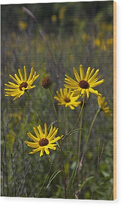 3 Sunflowers 8152 Wood Print by Peter Skiba
