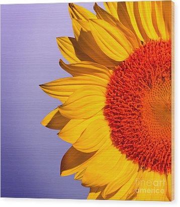 Sunflowers Wood Print by Mark Ashkenazi