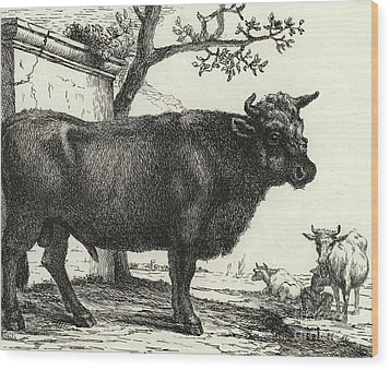 The Bull Wood Print by Paulus Potter