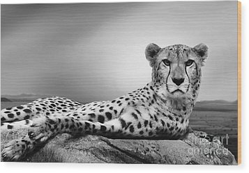 Wood Print featuring the photograph The Cheetah by Christine Sponchia