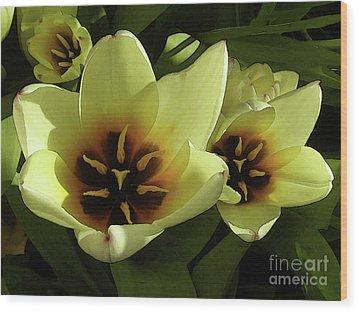 Tulip Lights #4 Wood Print