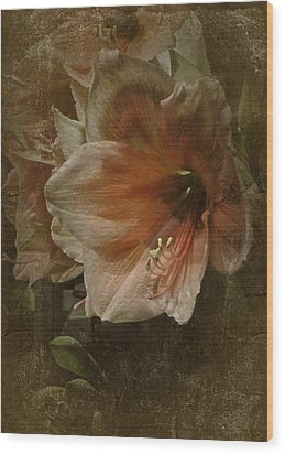 Wood Print featuring the photograph Vintage Amaryllis by Richard Cummings