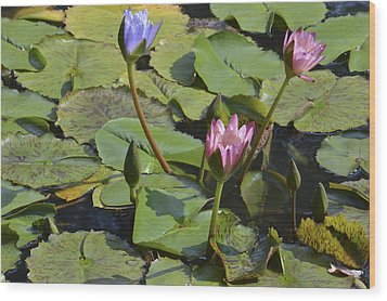 Water Lilies Wood Print by Linda Geiger