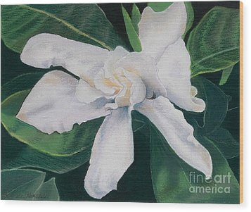 White Camelia Wood Print by Lucinda  Hansen