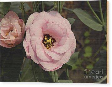 Pink Flowers Wood Print by Elvira Ladocki