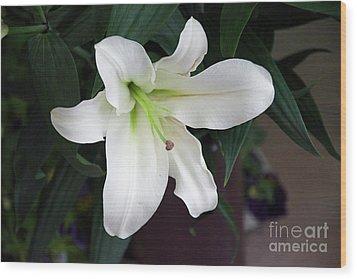 White Lily Wood Print by Elvira Ladocki