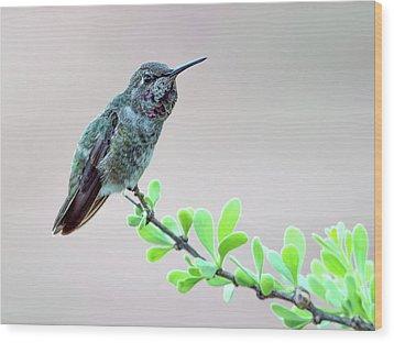 Anna's Hummingbird Wood Print by Tam Ryan