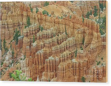 Bryce National Park, Utah Wood Print by Patricia Hofmeester