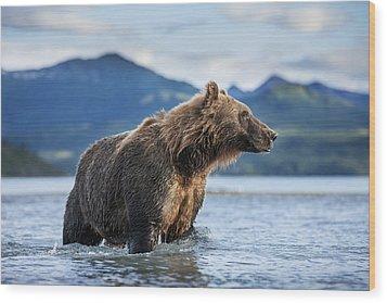 Coastal Brown Bear  Ursus Arctos Wood Print by Paul Souders