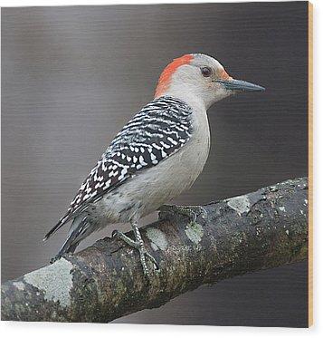 Female Red-bellied Woodpecker Wood Print