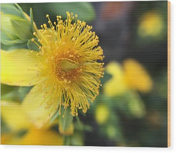 Flower Wood Print by Maxim Tzinman