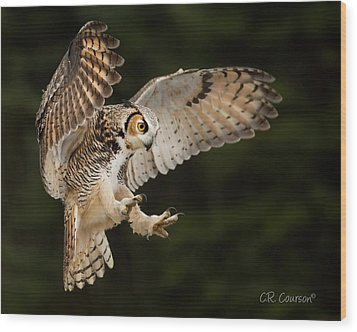 Great Horned Owl Wood Print by CR Courson