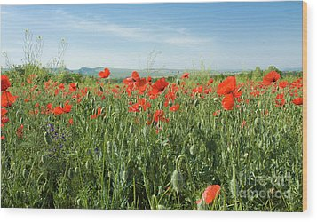 Meadow With Red Poppies Wood Print by Irina Afonskaya