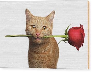 Portrait Of Ginger Cat Brought Rose As A Gift Wood Print
