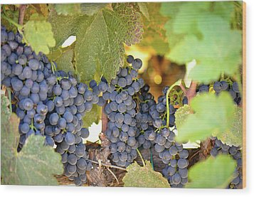 Red Grapes Wood Print by Brandon Bourdages