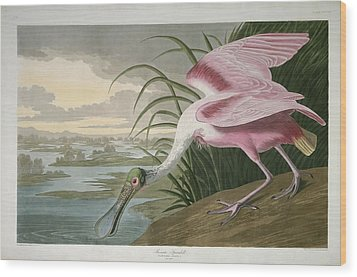 Roseate Spoonbill Wood Print by Rob Dreyer
