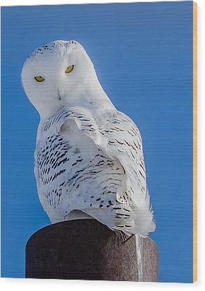 Snowy Owl Wood Print by Dan Traun