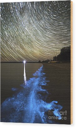 Star Trails And Bioluminescence Wood Print by Philip Hart