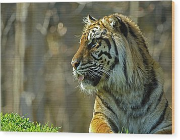 Wood Print featuring the photograph Sumatran Tiger by JT Lewis