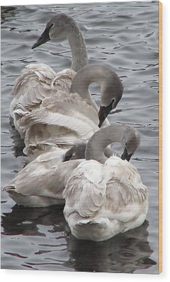 4 Swans Wood Print by Laurie With