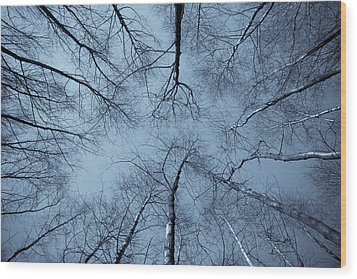 Trees In Epping Forest Wood Print