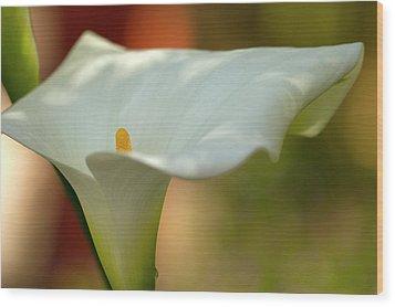 White Calla Wood Print by Heiko Koehrer-Wagner