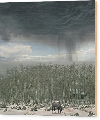 Wood Print featuring the photograph 4375 by Peter Holme III