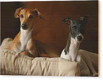 Italian Greyhounds Wood Print