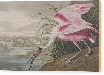 Roseate Spoonbill Wood Print by John James Audubon