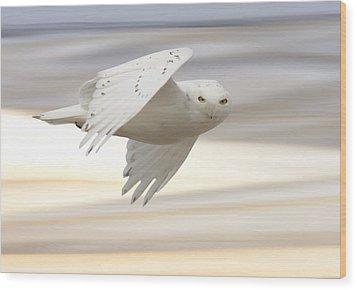 Snowy Owl In Flight Wood Print by Mark Duffy