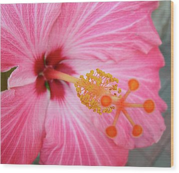 Wood Print featuring the photograph 5 Star Hibiscus by Randy Rosenberger