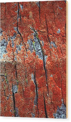 Tree Bark Wood Print by John Foxx