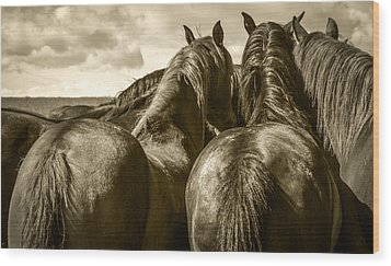 #5815 - Mortana Morgan Mares Wood Print