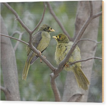 Bellbird Wood Print