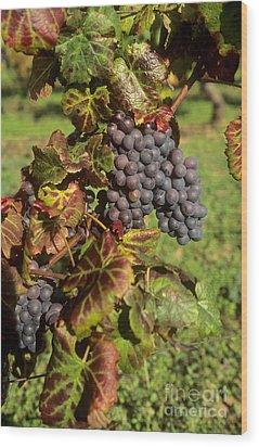 Grapes Growing On Vine Wood Print by Bernard Jaubert