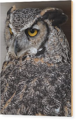 Wood Print featuring the photograph Great Horned Owl by JT Lewis