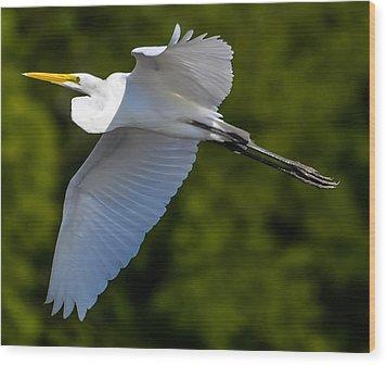 Great White Heron Wood Print by Brian Stevens