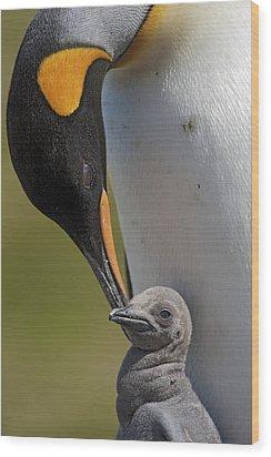 King Penguin Aptenodytes Patagonicus Wood Print by Ingo Arndt