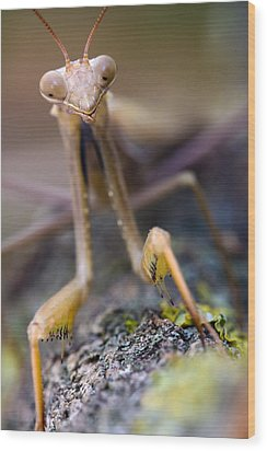 Mantis Wood Print by Andre Goncalves